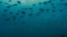 海洋 MV