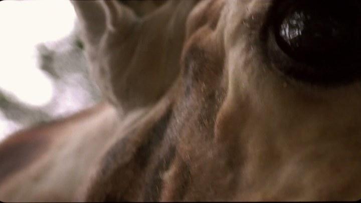 来自动物园的明信片 德国预告片2