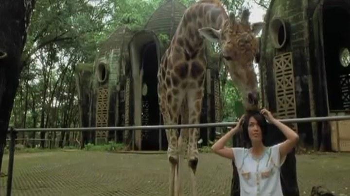 来自动物园的明信片 台湾预告片1 (中文字幕)
