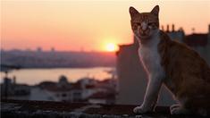 """爱猫之城 """"喵趣横生""""版预告"""