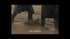 吴仁宝 预告片2