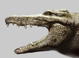 《百万巨鳄》特效终极解密 逐帧还原阿毛生产过程