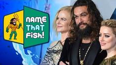 海王 跟着主创学习海洋鱼类知识