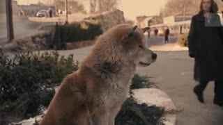 不一样的谈论 用尽一生等待主人的忠诚狗狗《忠犬八公的故事》沃特说
