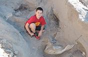 男孩绊了一跤发现120万年前化石