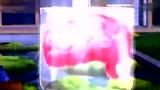 植物大战僵尸_08