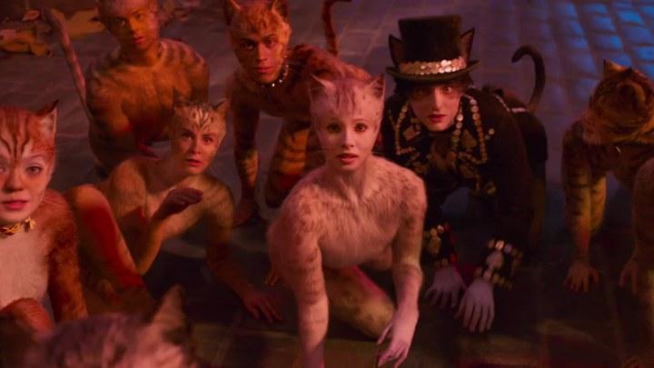 猫 电视版1