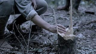 《伟大的转折》竹子也有雌雄之分? 红军砍竹子留铜钱!