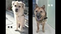 《我的狗狗我的爱》曝公益特辑 倡导关爱流浪动物