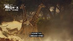 地球:神奇的一天 长颈鹿特辑