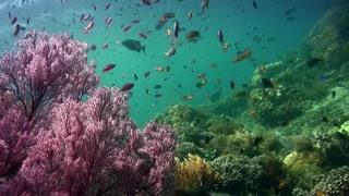 探索南海水下世界