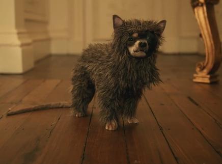 《黑白魔女库伊拉》wink特辑 五条狗狗出演同一角色