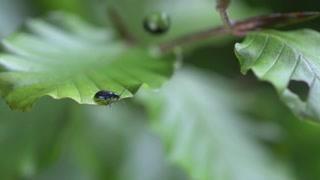 高速摄影机记录一滴水对树叶上的小虫子的影响 水对动物是生命