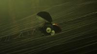 《昆虫总动员2-来自远方的后援军》终极海报预告齐发,8月23日踏上意外之旅