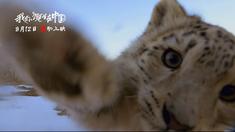 我们诞生在中国 制作特辑之雪豹