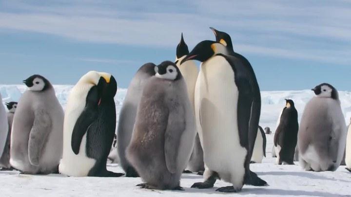 帝企鹅日记2:召唤 片段 (中文字幕)