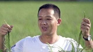 刘维才回家创业 香米稻的种植并不简单