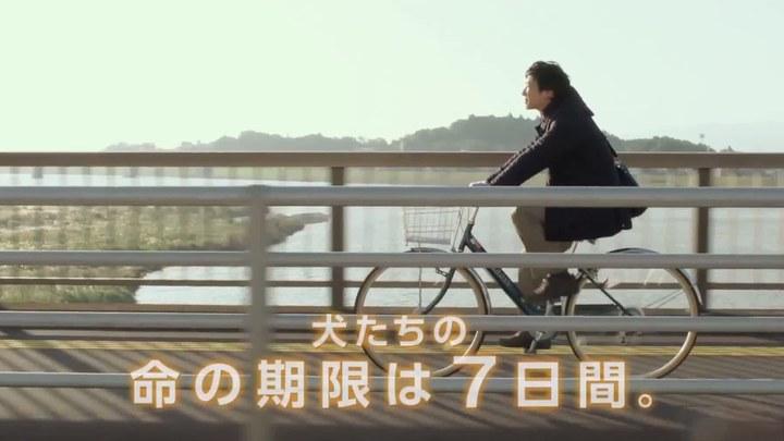 向日葵与幼犬的7天 日本预告片2