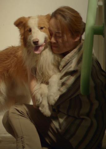 《一条狗的使命2》发布母亲节视频 爱唠叨,爱抱怨,但更爱你