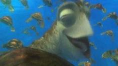3D海底总动员 片段之Exit Buddy