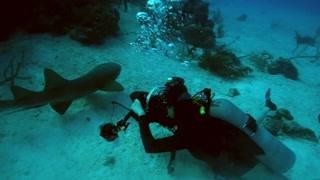 美女冒险家潜水环游世界