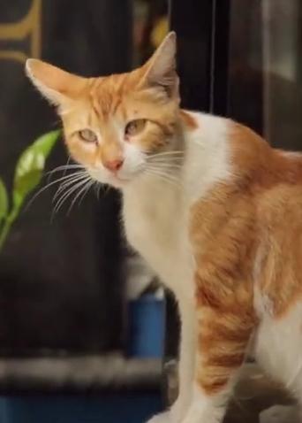 《爱猫之城》终极预告 9.22可爱喵喵萌化中秋