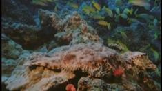 海底世界3D 片段之Sharks Fish