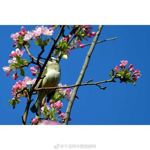 网友投稿丨鸟语花香——今早拍于元大都城墙遗址公园