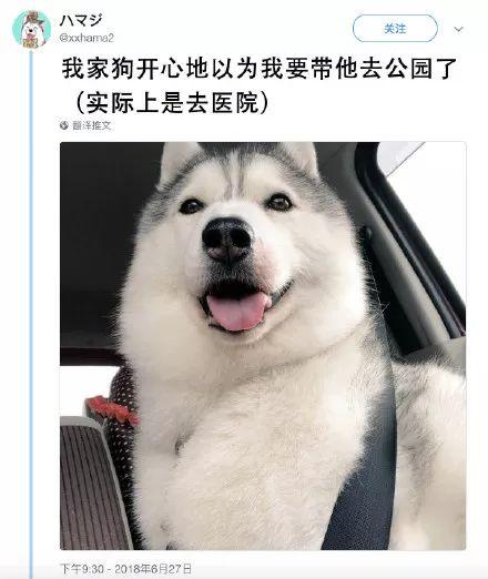 xhama2 我家狗开心地以为我要带他去公园了 (实际上是去医院) 翻