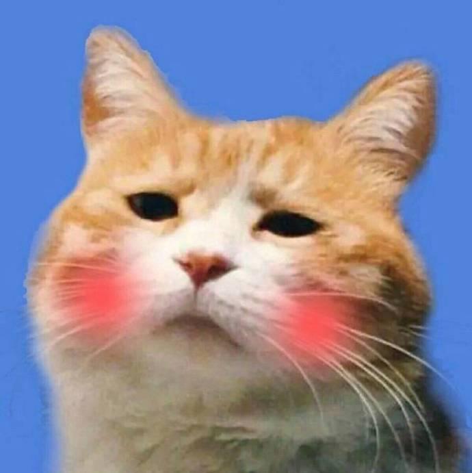 表情 一组猫狗情侣头像来自表情包集中营 微博 表情