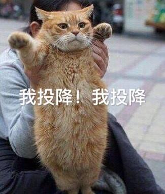 表情 我投降 猫咪 猫咪 投降表情 发表情 fabiaoqing.com 表情
