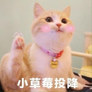表情 猫咪表情包小草莓投降表情微信表情 喵星人微信表情 KanQQ个性网手机版 表情