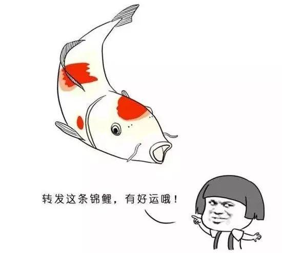 表情 转发锦鲤的时候,你要知道它是如何成为中国网友的祥瑞的 触电新闻 表情