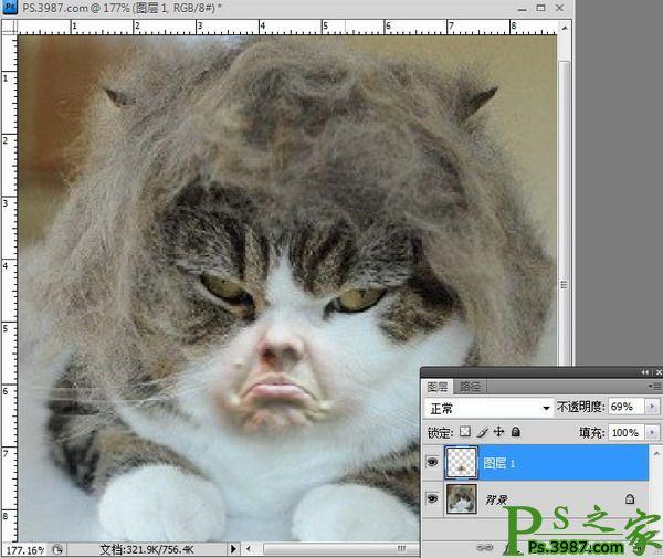 表情 PS恶搞 PS制作搞笑猫咪不屑的表情 PS之家 统一下载 表情