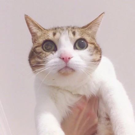 表情 喜欢猫和狗的情侣微信头像 情侣头像 窝窝QQ网 表情