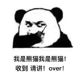 收到请讲!over! 我是熊猫我是熊猫!-表情 熊猫表情大全 熊猫表情包