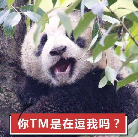 熊猫是胎生哺乳动物 说句不怕被你们打死的话 就熊猫这 傻样儿   ▽