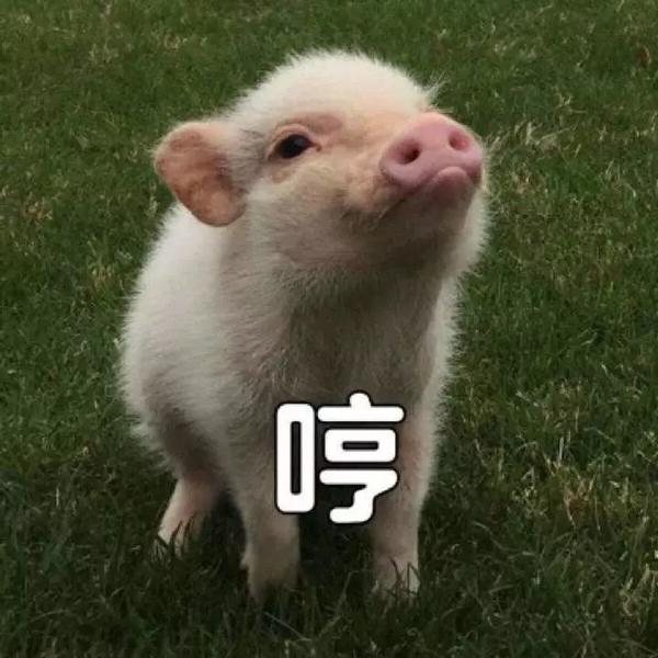 蠢萌��/i�lo;�#9`����yc%���yᢹi-:`�_明明是狗年,为什么最火的是蠢萌的猪猪表情包?
