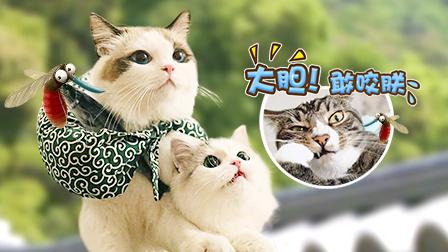 猫行日本山口县 石头庭院里的好男人