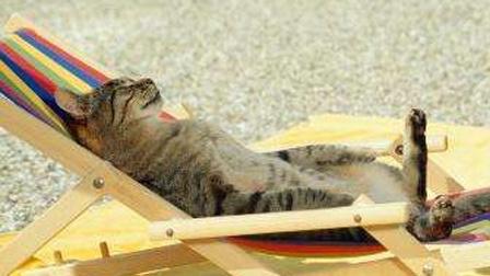 猫行法国南部 在长椅上晒日光浴