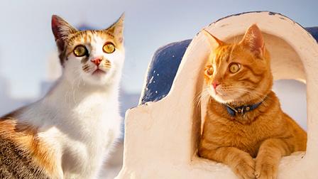 猫咪们的乐园  希腊爱琴海上猫的数量接近人类3倍