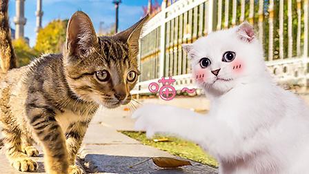 生活在马拉喀什摊位下的猫妈妈和5只猫宝宝