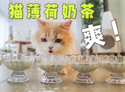 猫:我胖没有一杯奶茶是无辜的