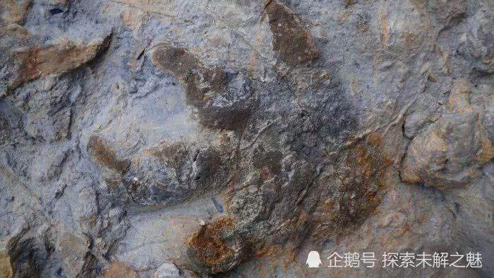 英国发现恐龙脚印