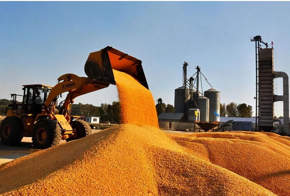 玉米價格持續上漲,大豆價格飆至高點?未來糧價啥樣?新糧價早知