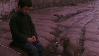 小孩骗老江湖 都是社会人
