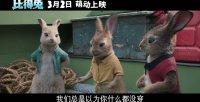 """比得兔(""""穿搭达人""""特辑)"""