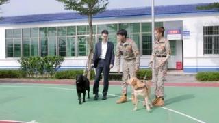 《神犬小七3》林海涛向安心边慕表示感谢 小七又有新朋友了