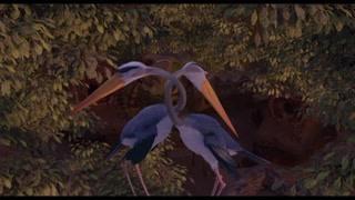 夜晚时刻 鸟儿们休息的样子真有特色
