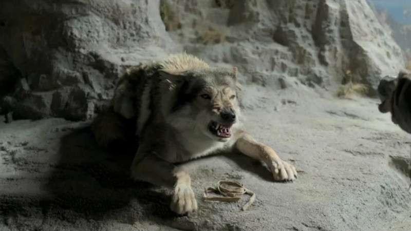 《阿尔法》预告片 讲述史前人狼传说